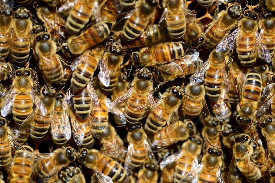 מטיילים הותקפו על ידי דבורים בפארק סמוך לספסופה – 7 פצועים הועברו לטיפול