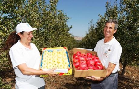 תפוחי העץ – הדור הבא: החברה לפיתוח הגליל הציגה את תפוחי העתיד שייכבשו את השווקים ואת שולחן החג