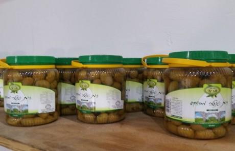 פסטיבל הזית בגליל יוצא לדרך