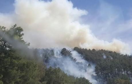 """שריפה מבוקרת ביער ביריה – בקק""""ל נערכים לקיץ"""