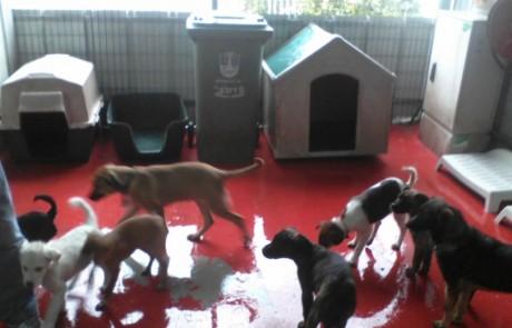 לראשונה:משרד החקלאות יממן הקמת כלביות אזוריות