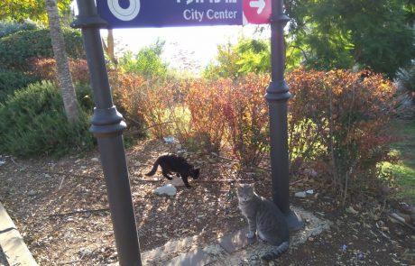 בגלל פחי האשפה המוטמנים: חתולי הרחוב בצפת גוועים ברעב