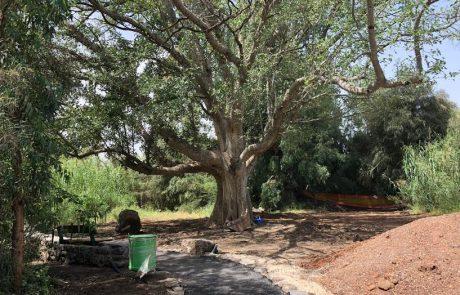 """קק""""ל הנגישה את הדרך לטחנות הקמח העתיקות בפארק הירדן"""
