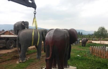 """תאילנד בנהר הירדן: מיקום חדש לעדר הפילים של מלון """"הווילג'"""""""